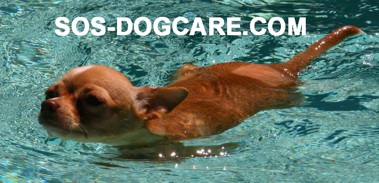 SOS - Sick or Senior Dog Care